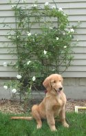 Willow taking credit for the rose bushes