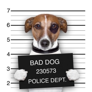 Dog in jail with bad dog sign