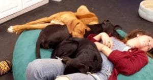 Staff snuggling with dogs