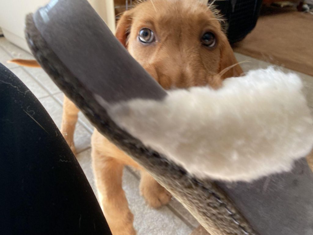 Make important lessons a game for your puppy